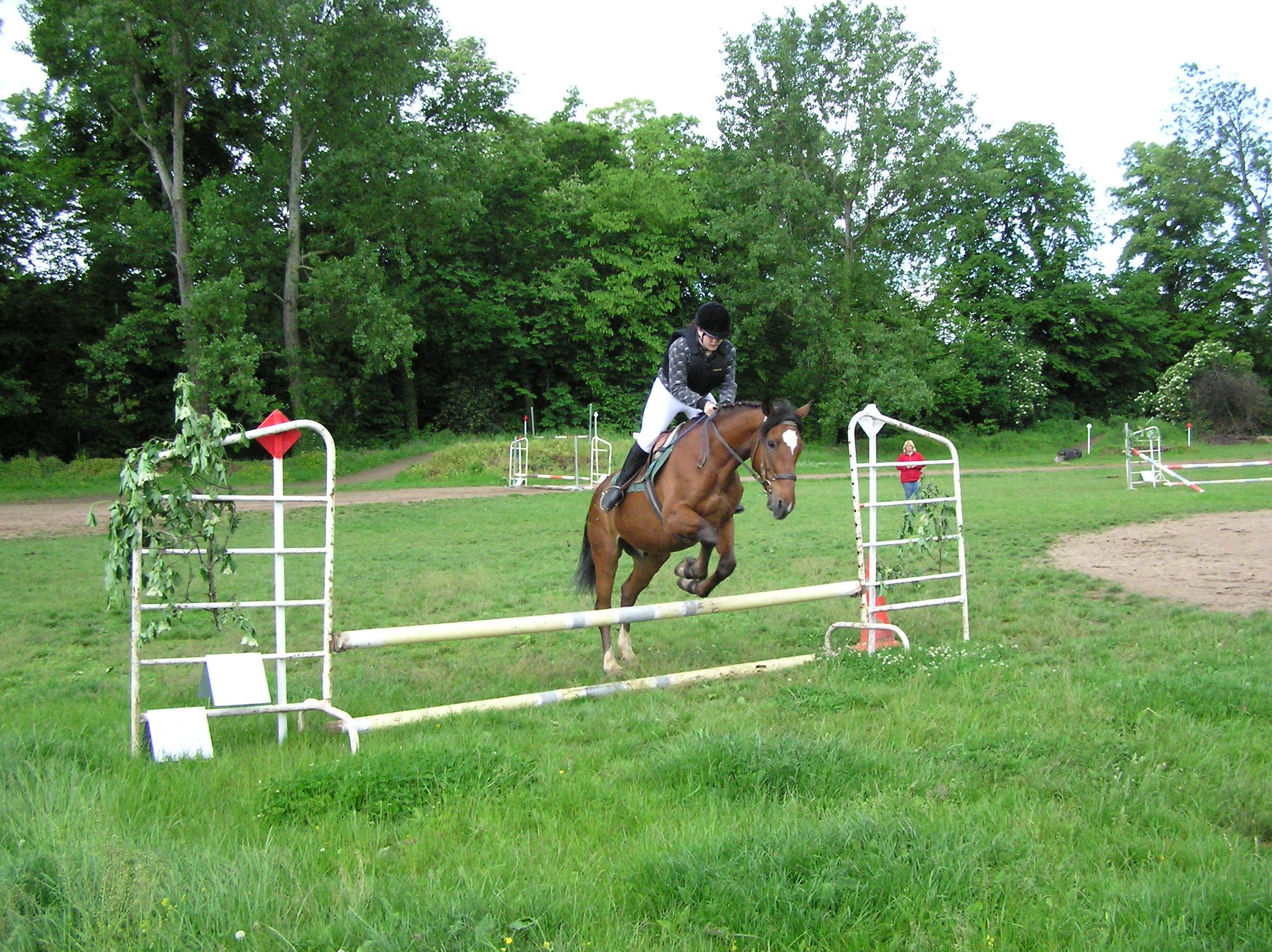 Les chevaux saut d obstacle - Frison saut d obstacle ...